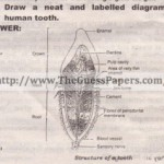 Biology (Science) Solved Past Paper 9th Class 2013 Karachi Board